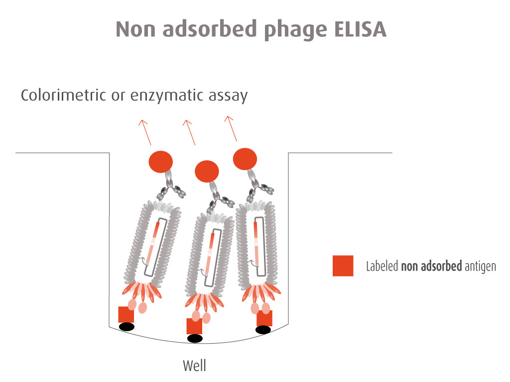 Validating elisa assays